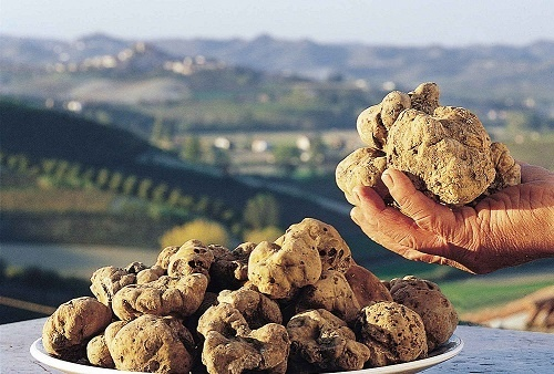 Searching for truffles : special stay in Agriturismo Terracruda